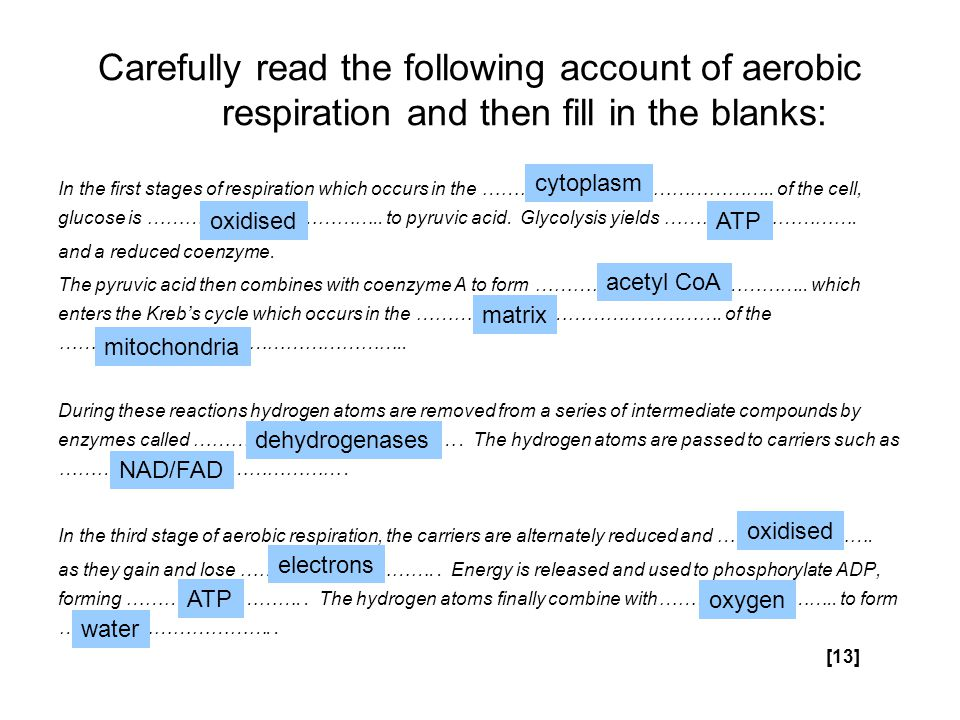 Carefully read the following account of aerobic respiration and then fill in the blanks: