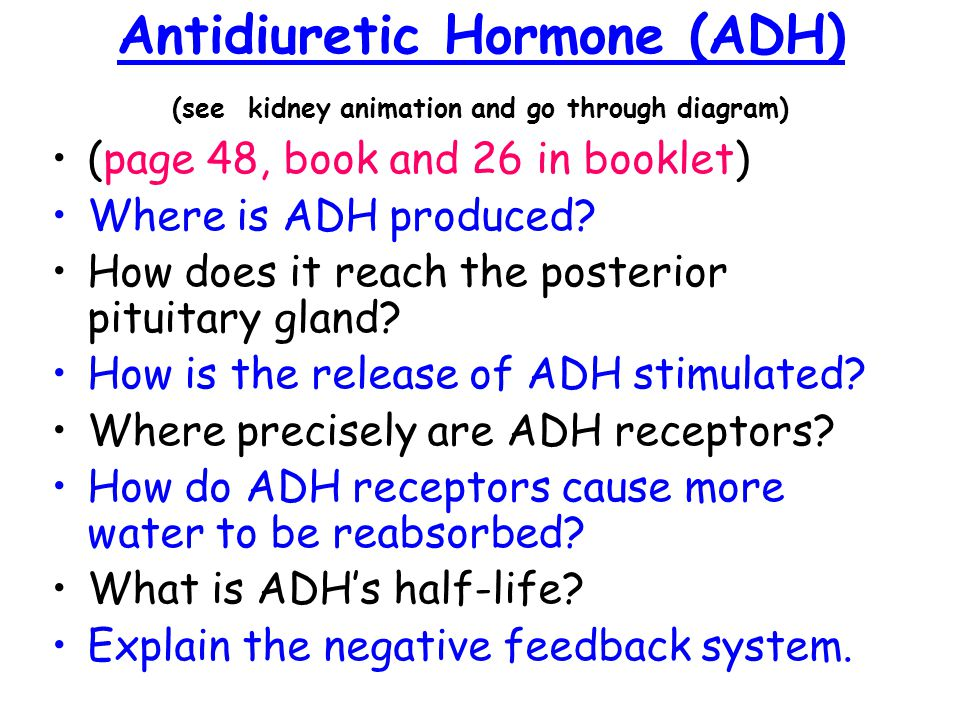 Antidiuretic Hormone (ADH) (see kidney animation and go through diagram)
