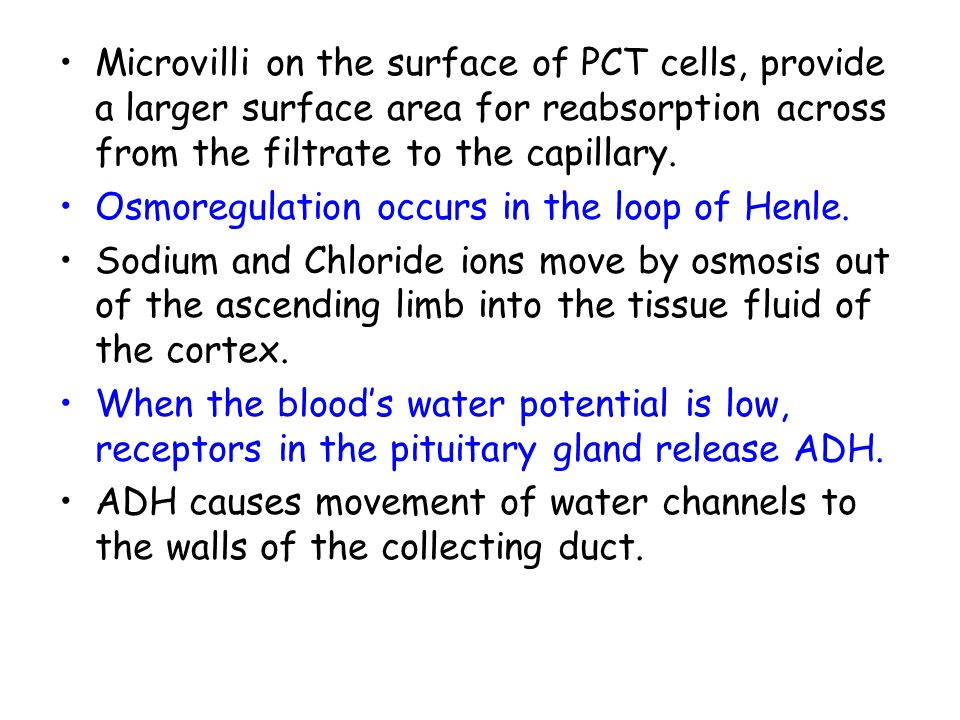 Microvilli on the surface of PCT cells, provide a larger surface area for reabsorption across from the filtrate to the capillary.