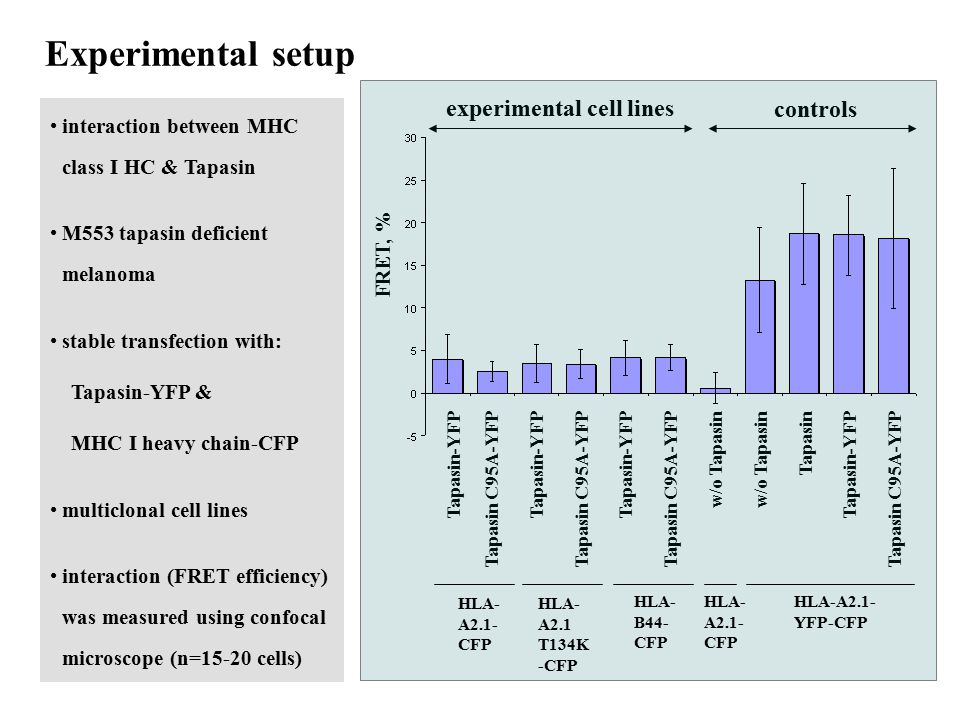 Experimental setup experimental cell lines controls