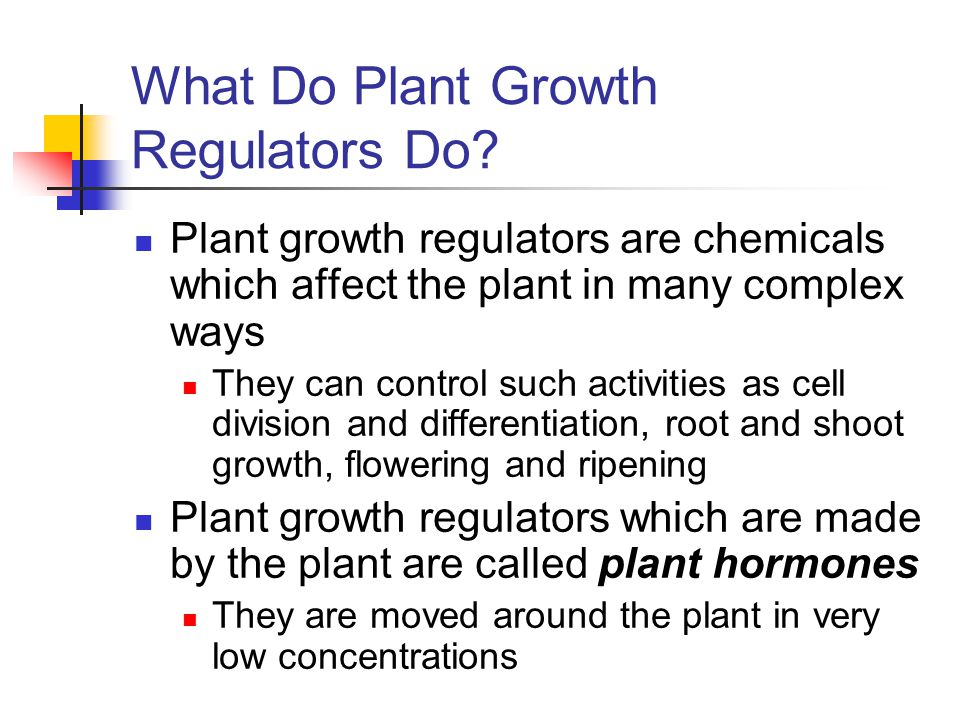 What Do Plant Growth Regulators Do