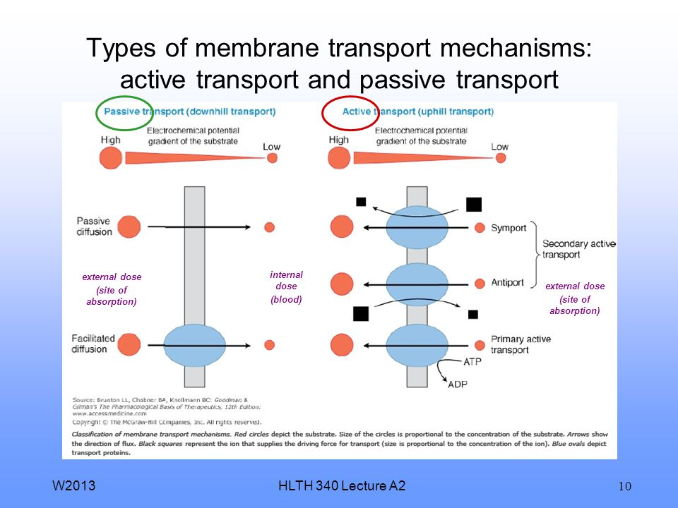 Types of membrane transport mechanisms: active transport and passive transport