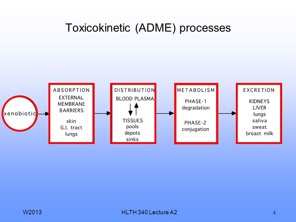 Toxicokinetic (ADME) processes