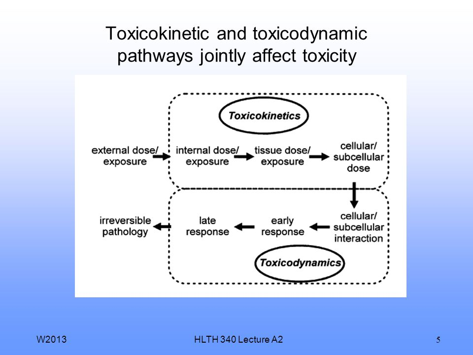 Toxicokinetic and toxicodynamic pathways jointly affect toxicity