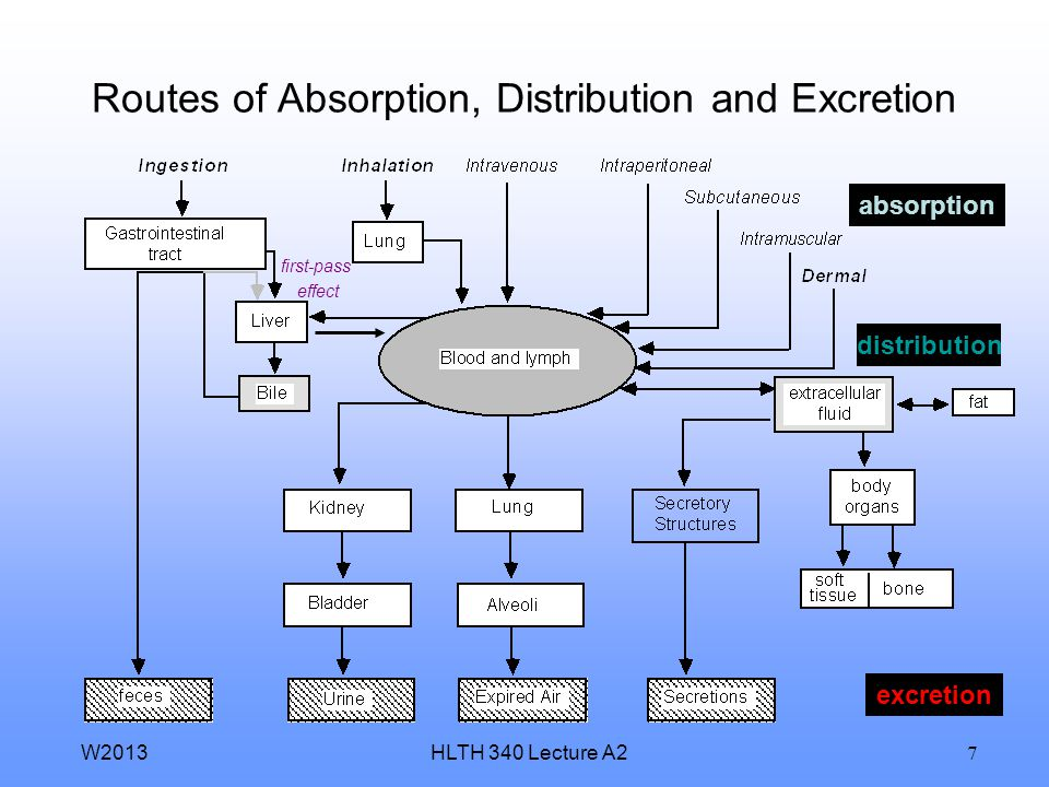 Routes of Absorption, Distribution and Excretion