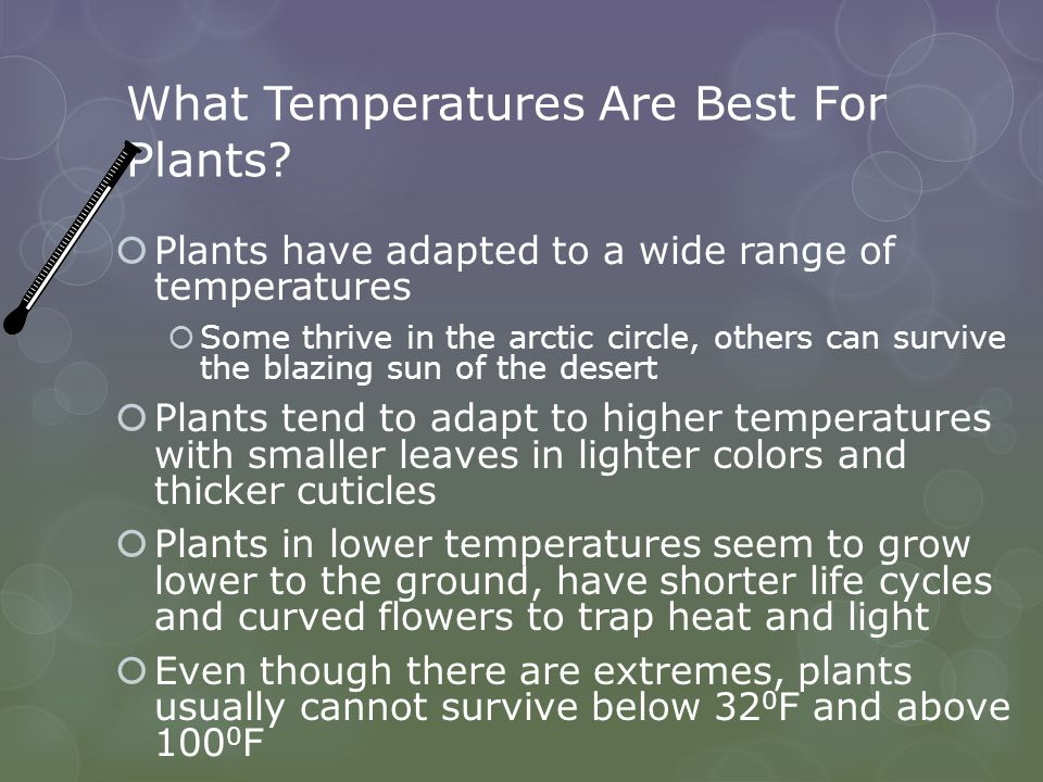 What Temperatures Are Best For Plants