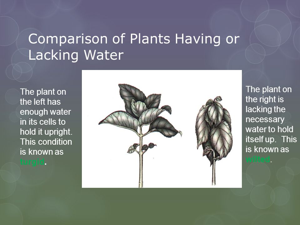 Comparison of Plants Having or Lacking Water