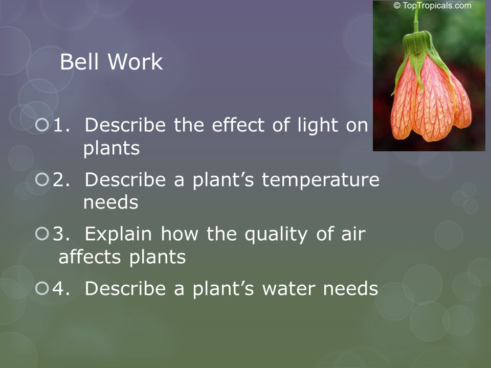 Bell Work 1. Describe the effect of light on plants