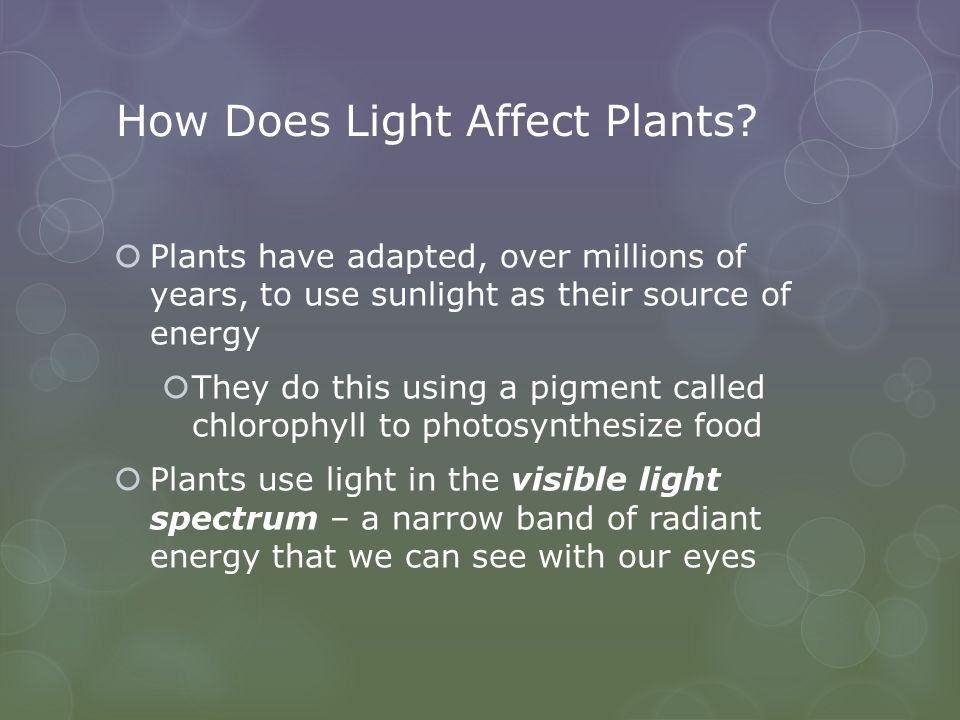 How Does Light Affect Plants