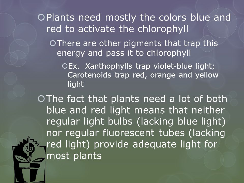 Plants need mostly the colors blue and red to activate the chlorophyll