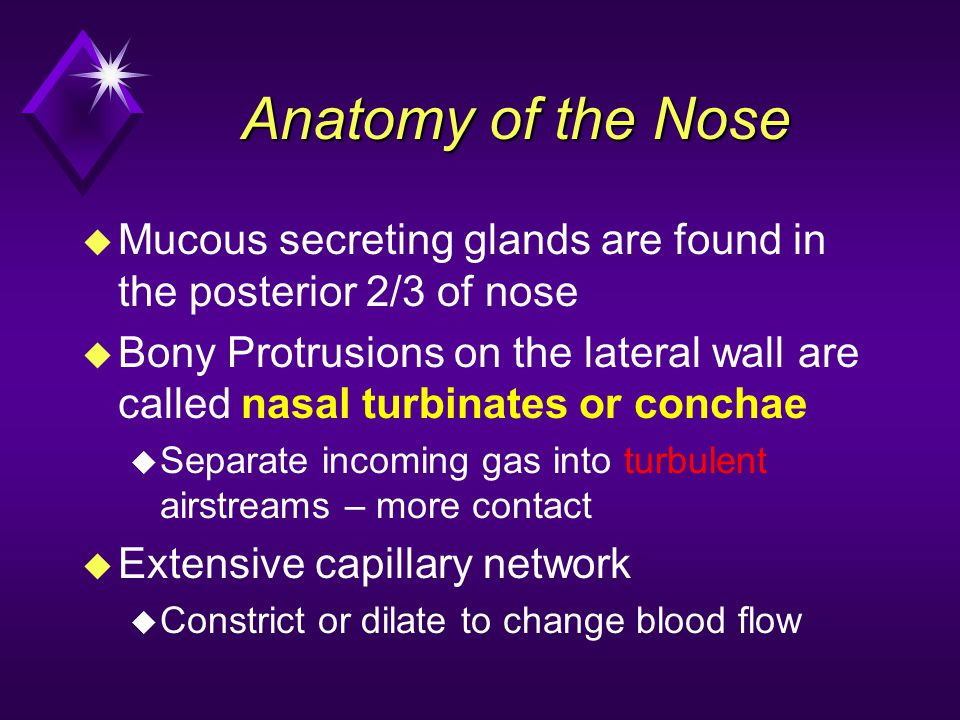 Anatomy of the Nose Mucous secreting glands are found in the posterior 2/3 of nose.