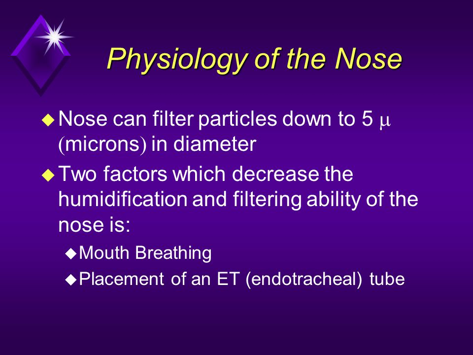 Physiology of the Nose Nose can filter particles down to 5 m (microns) in diameter.