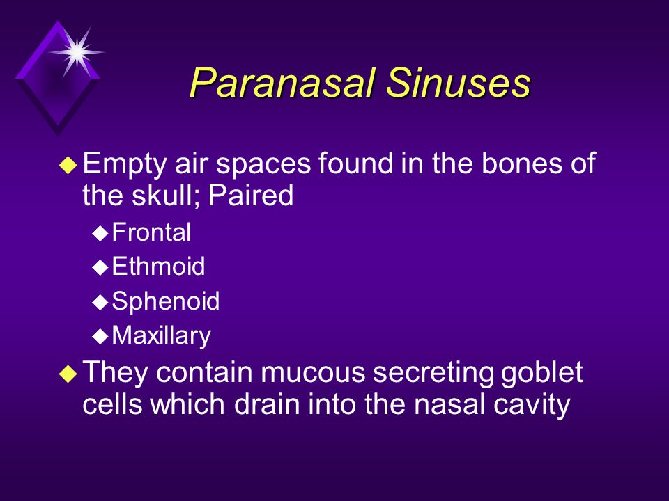 Paranasal Sinuses Empty air spaces found in the bones of the skull; Paired. Frontal. Ethmoid. Sphenoid.