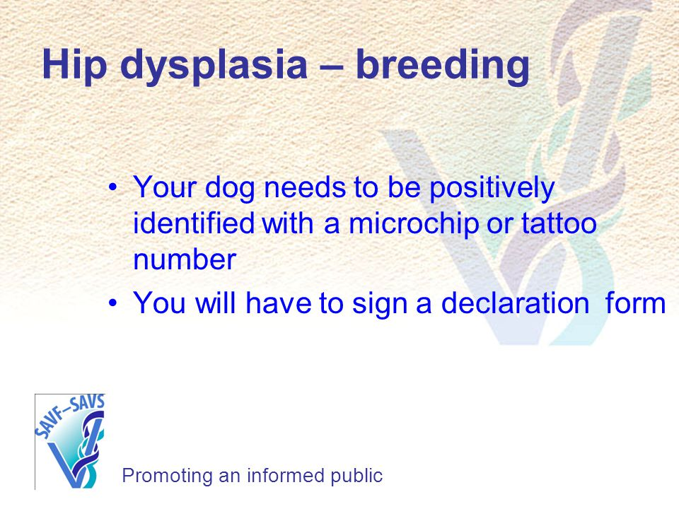 Hip dysplasia – breeding