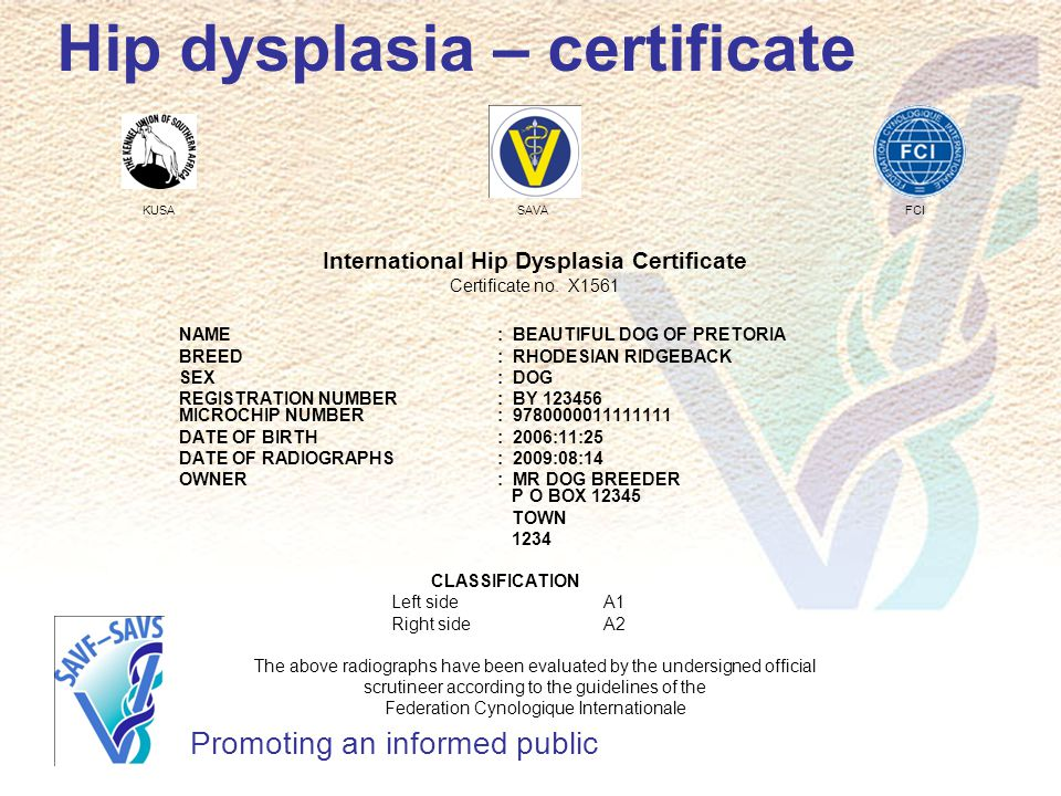 Hip dysplasia – certificate