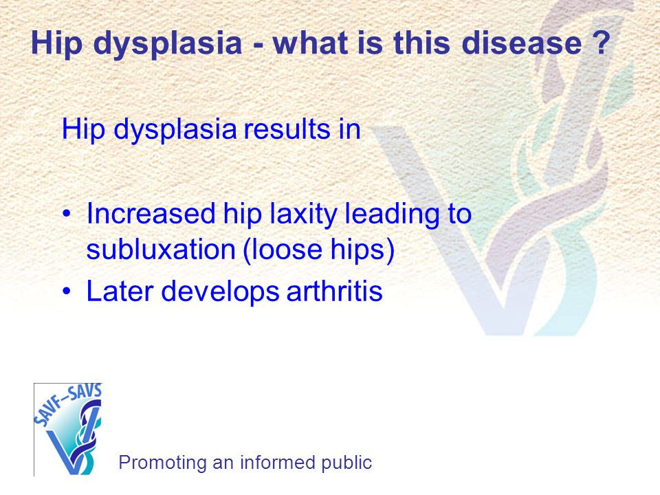 Hip dysplasia - what is this disease
