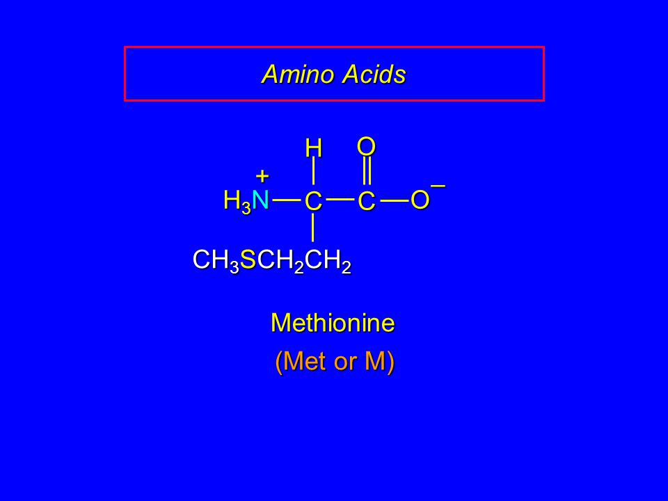 Amino Acids H O + – H3N C C O CH3SCH2CH2 Methionine (Met or M)