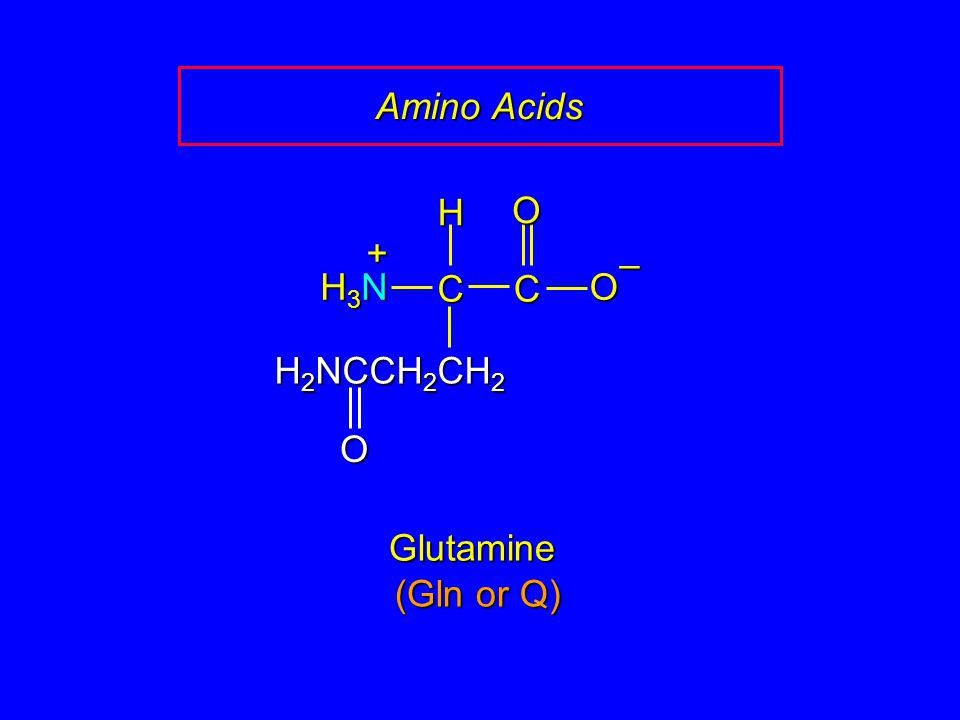 Amino Acids C O – H H3N + H2NCCH2CH2 Glutamine (Gln or Q)