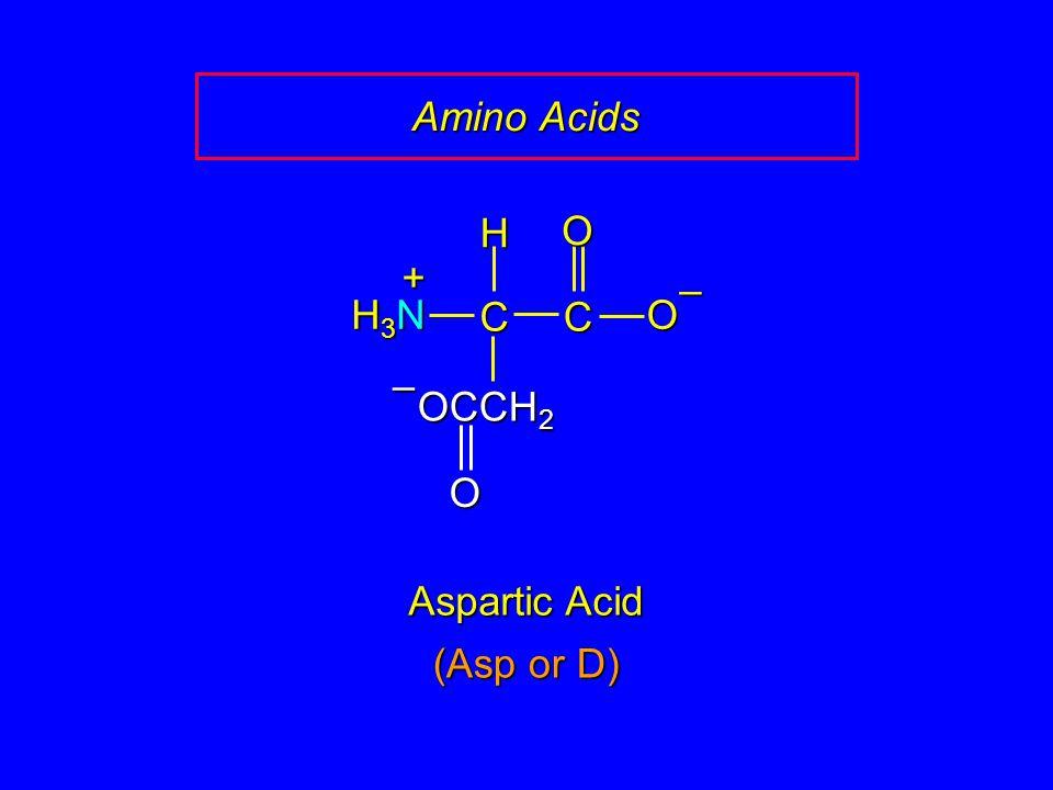 Amino Acids C O – H H3N + OCCH2 Aspartic Acid (Asp or D)