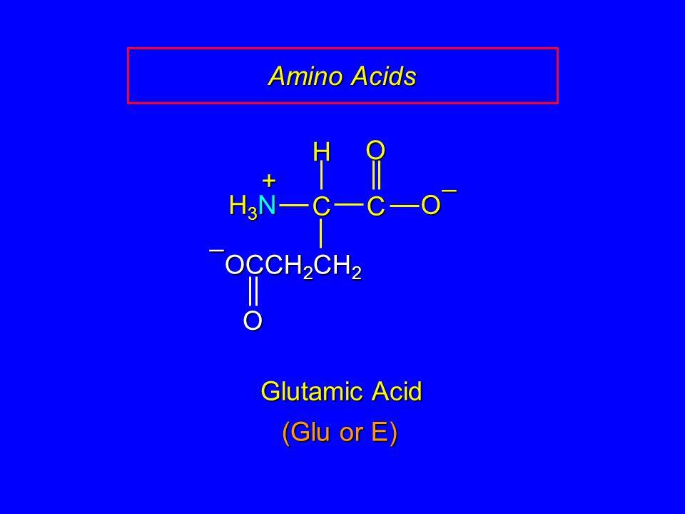Amino Acids C O – H H3N + OCCH2CH2 Glutamic Acid (Glu or E)