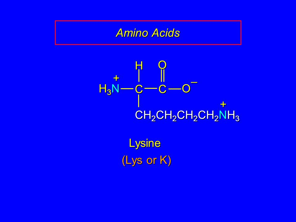 Amino Acids H O + – H3N C C O + CH2CH2CH2CH2NH3 Lysine (Lys or K)