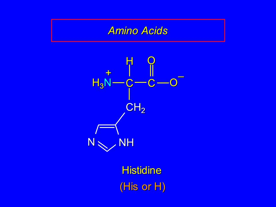 Amino Acids H O + – H3N C C O CH2 NH N Histidine (His or H)