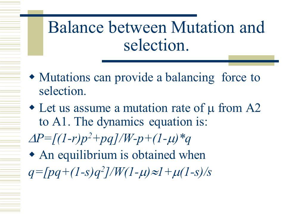 Balance between Mutation and selection.