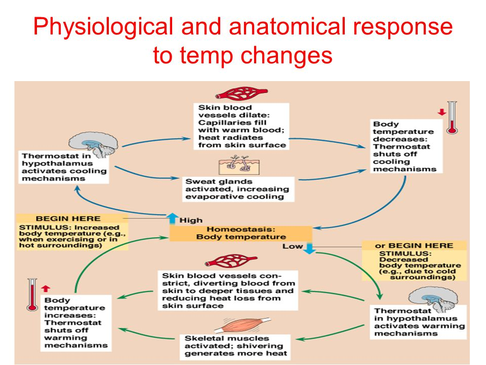 Physiological and anatomical response to temp changes