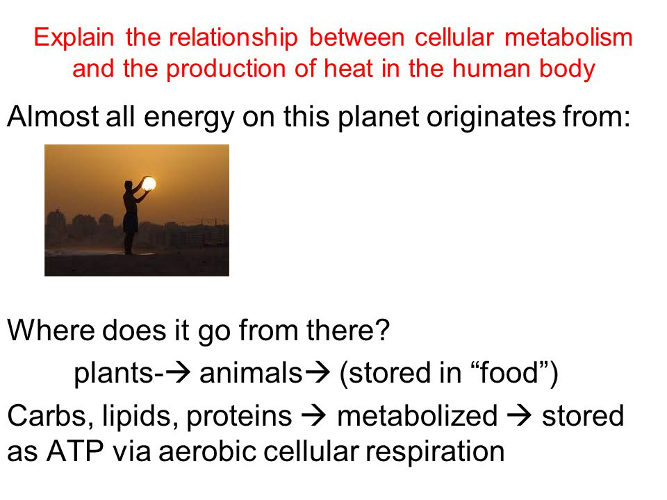 Almost all energy on this planet originates from: