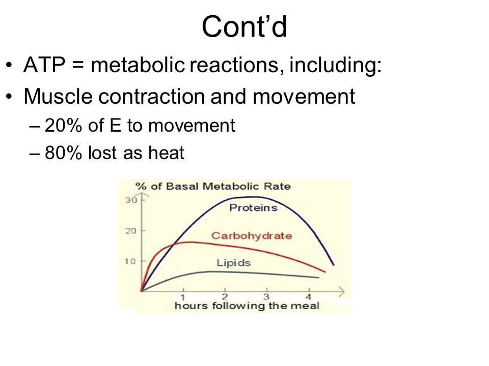 Cont'd ATP = metabolic reactions, including: