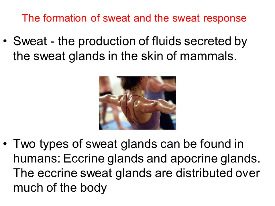 The formation of sweat and the sweat response