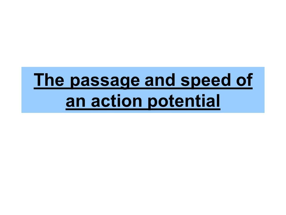 The passage and speed of an action potential