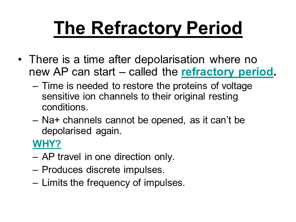 The Refractory Period There is a time after depolarisation where no new AP can start – called the refractory period.