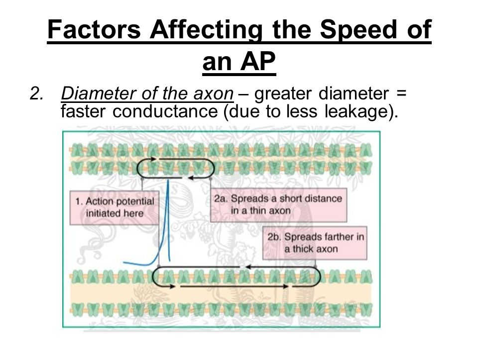 Factors Affecting the Speed of an AP