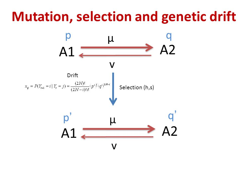 Mutation, selection and genetic drift