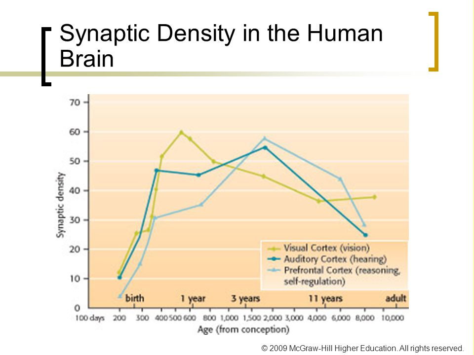 Synaptic Density in the Human Brain