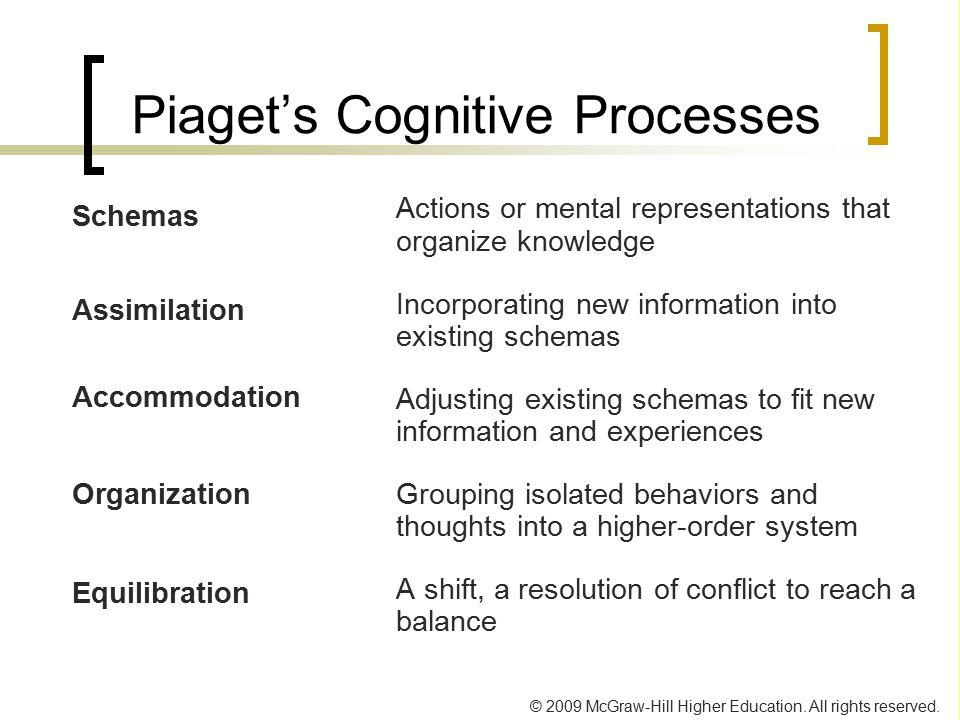 Piaget's Cognitive Processes