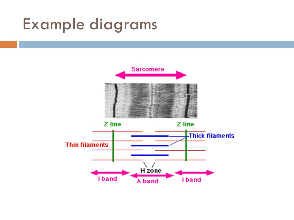 Example diagrams