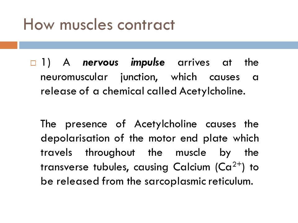 How muscles contract 1) A nervous impulse arrives at the neuromuscular junction, which causes a release of a chemical called Acetylcholine.