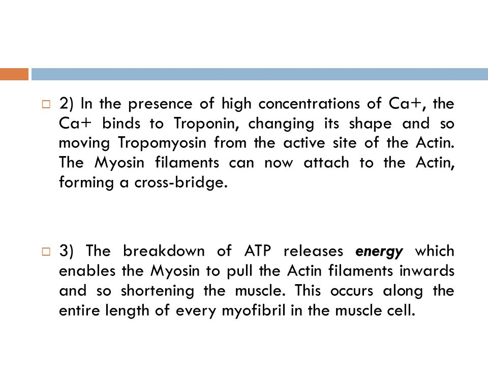 2) In the presence of high concentrations of Ca+, the Ca+ binds to Troponin, changing its shape and so moving Tropomyosin from the active site of the Actin. The Myosin filaments can now attach to the Actin, forming a cross-bridge.