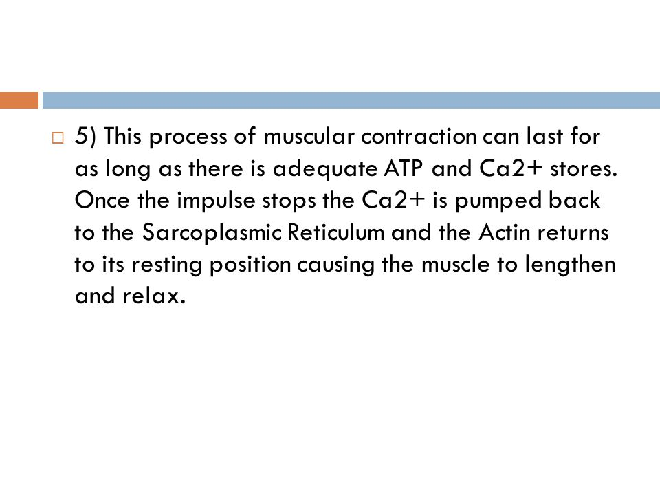 5) This process of muscular contraction can last for as long as there is adequate ATP and Ca2+ stores.