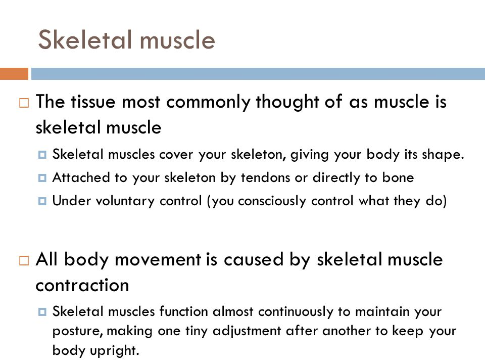 Skeletal muscle The tissue most commonly thought of as muscle is skeletal muscle. Skeletal muscles cover your skeleton, giving your body its shape.