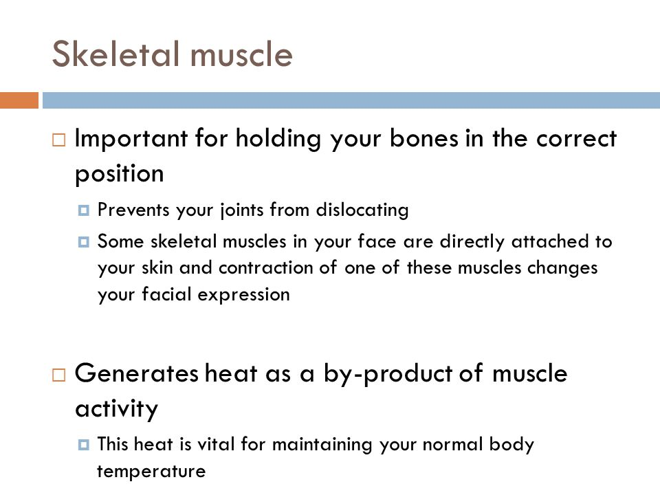 Skeletal muscle Important for holding your bones in the correct position. Prevents your joints from dislocating.