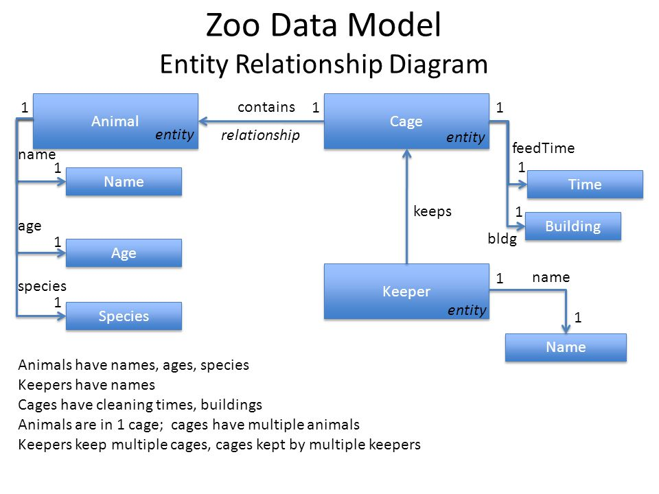 Zoo Data Model Entity Relationship Diagram