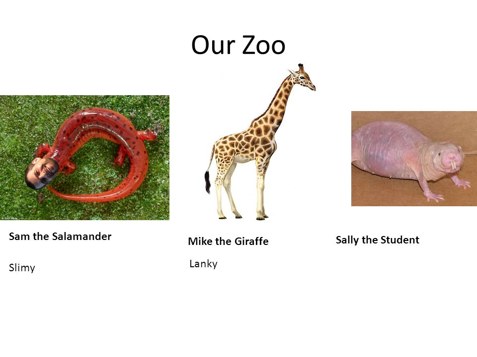 Our Zoo Sam the Salamander Mike the Giraffe Sally the Student Lanky