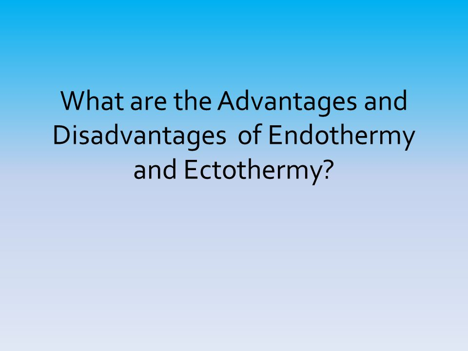 What are the Advantages and Disadvantages of Endothermy and Ectothermy