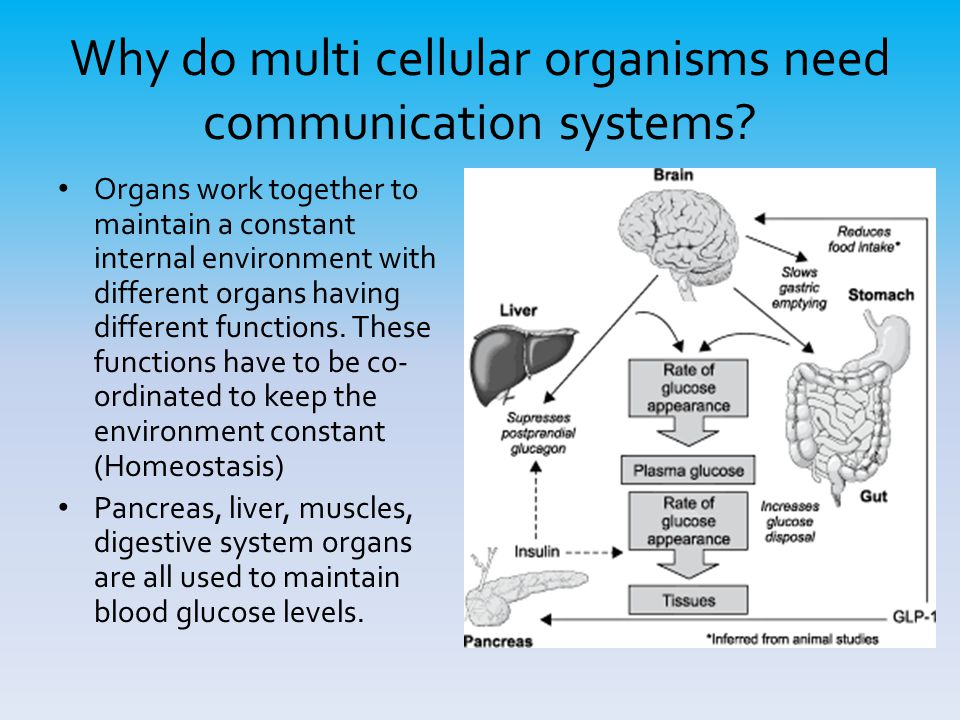 Why do multi cellular organisms need communication systems