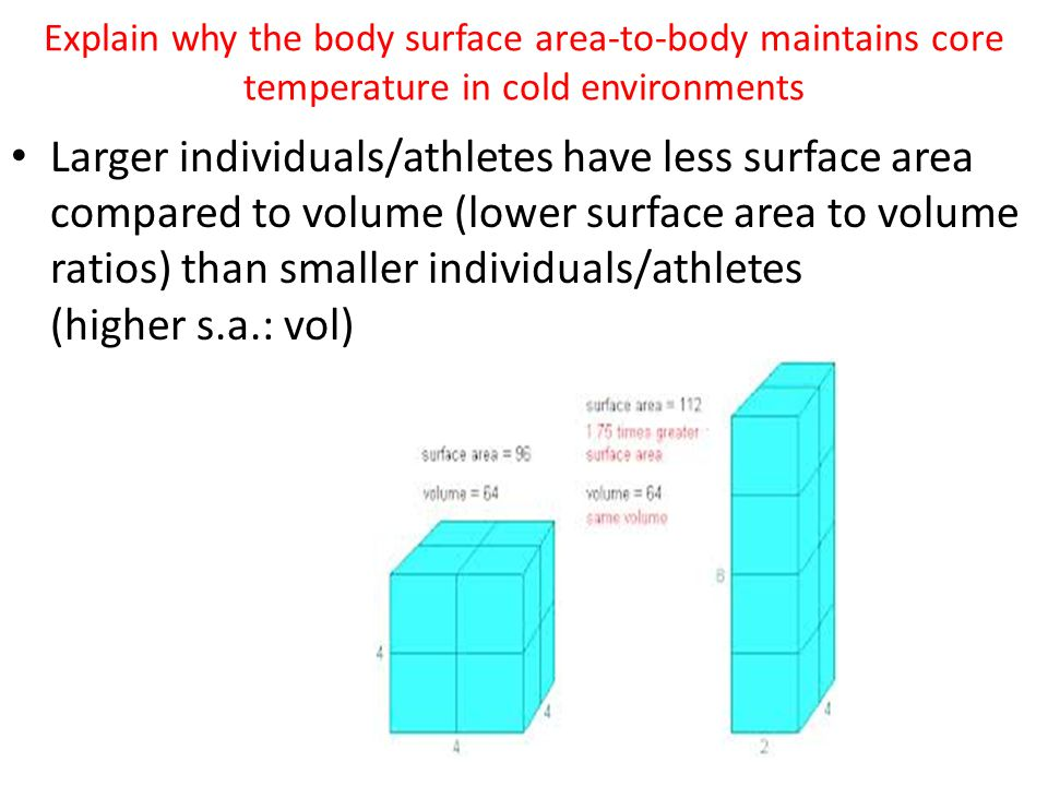 Explain why the body surface area-to-body maintains core temperature in cold environments