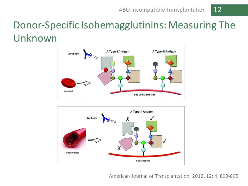 Donor‐Specific Isohemagglutinins: Measuring The Unknown