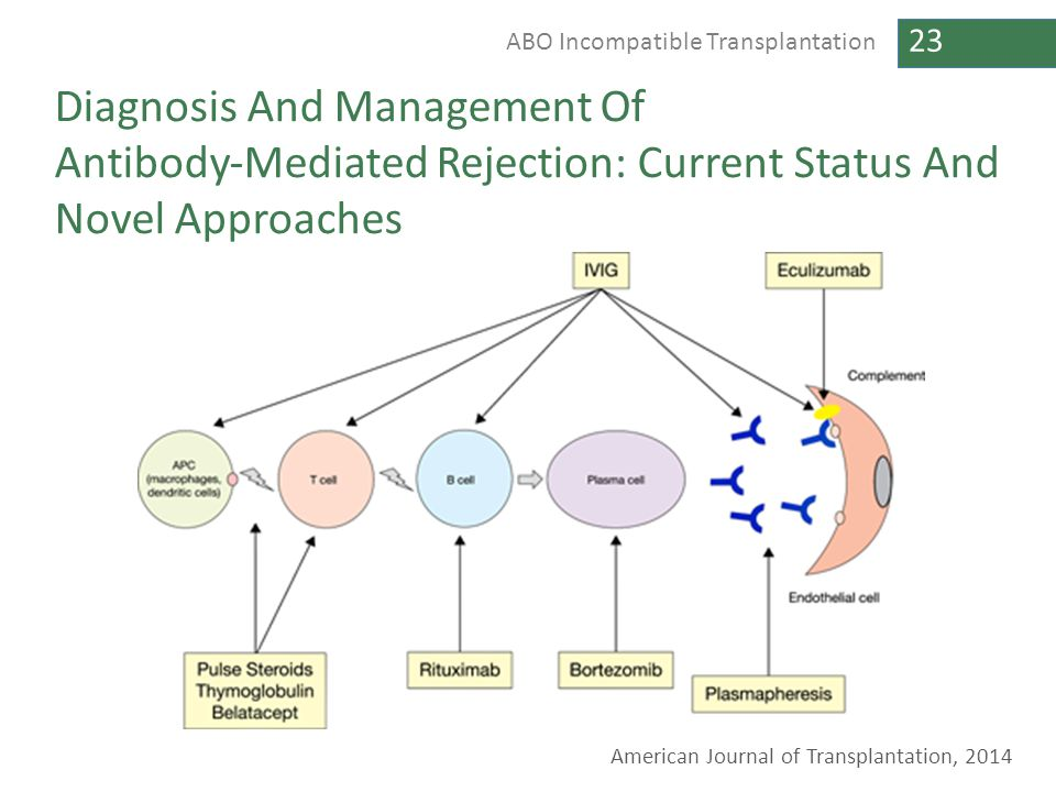 Diagnosis And Management Of Antibody‐Mediated Rejection: Current Status And Novel Approaches